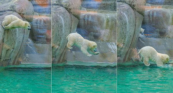 eisbaeren-m%c3%bcnchner-zoo-fotocredit-tierpark-hellabrunn-1