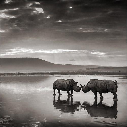 Grandiose Doppel-Ausstellung namens 'Africa' bei Bernheimer