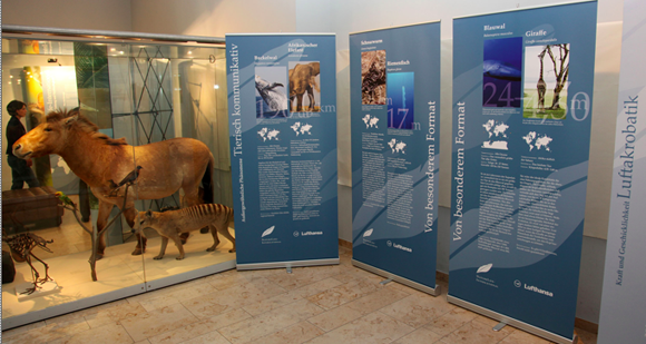 Phänomene in der Tierwelt: Exklusive Wanderausstellung 'World Champions of Nature'