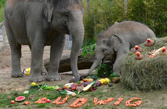 Tierpark Hellabrunn: So feiern Elefanten Geburtstag!