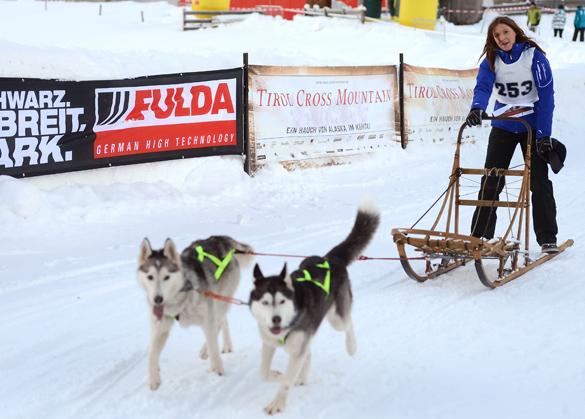 Hundeschlittenrennen 'Tirol Cross Mountain' 2012: Promis, Pfoten und Pulverschnee!
