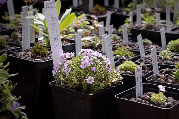 Deutschlands exklusivste Gartenmesse: 10 Gründe, die Freisinger Gartentage nicht zu verpassen
