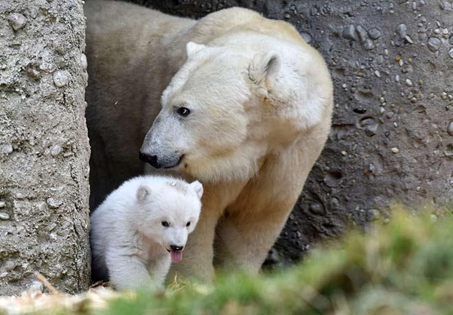 Eisbären Tag im Tierpark Hellabrunn