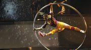 Circus Roncalli oder Cirque Eloize – Wohin geht die Zirkus-Reise?