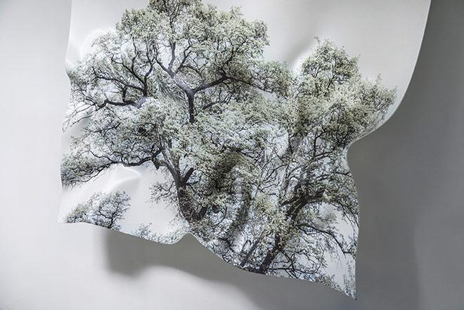 Hubertus Hamm, Baumbild aus seiner HAIKU-Serie, No. 3, 2015