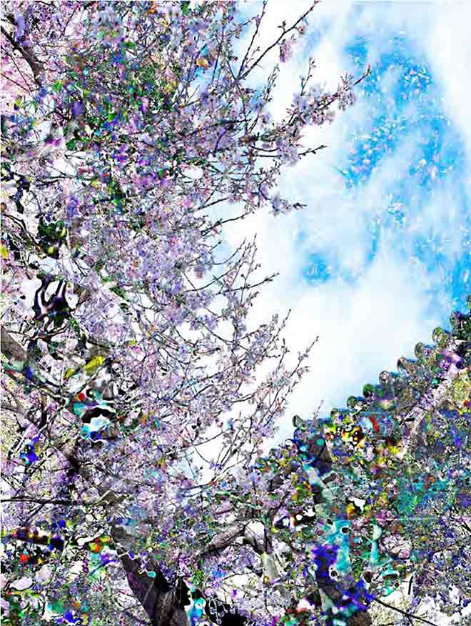 Während einer Japan-Reise ist auch dieses Bild entstanden. 'Sakura' nennt es Fiona Tan.