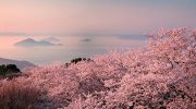 Dem Osterkaninchen auf der Spur: Kaninchen Insel in Japan