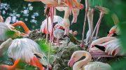 Tierpark Hellabrunn: Die ersten Sommer-Vorboten sind geschlüpft