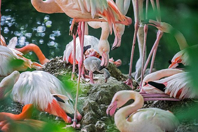 Die Flamingo Road im Tierpark Hellabrunn wächst ... und färbt den Tierpark Hellabrunn Sommer pink! Fotocredit: Tierpark Hellabrunn / Maria Fencik
