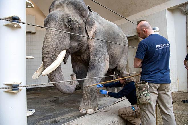 Elefant müsste man sein! Medical Training im Tierpark Hellabrunn. Foto: Marc Müller