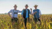 Quinoa aus Bayern: Drei Münchner Bauern und das heilige Korn der Inka