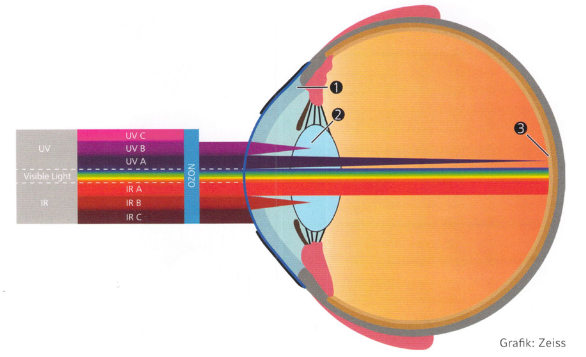 Blaulicht schädigt das menschliche Auge