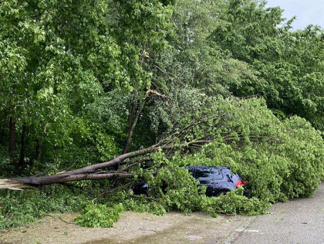 Wetter München: Wie aus dem Nichts stürzen sichtbar 'gesunde' Bäume auf parkende Autos. Fotocredit: EM