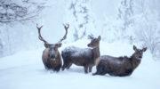 Erschreckende Trends, welche unsere Wildtiere gefährden!