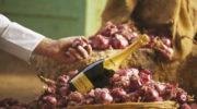 Krug Single Ingredient oder warum die Zwiebel wunderbar zum Champagner passt